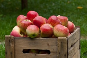 Snacking on apples really might improve your health.